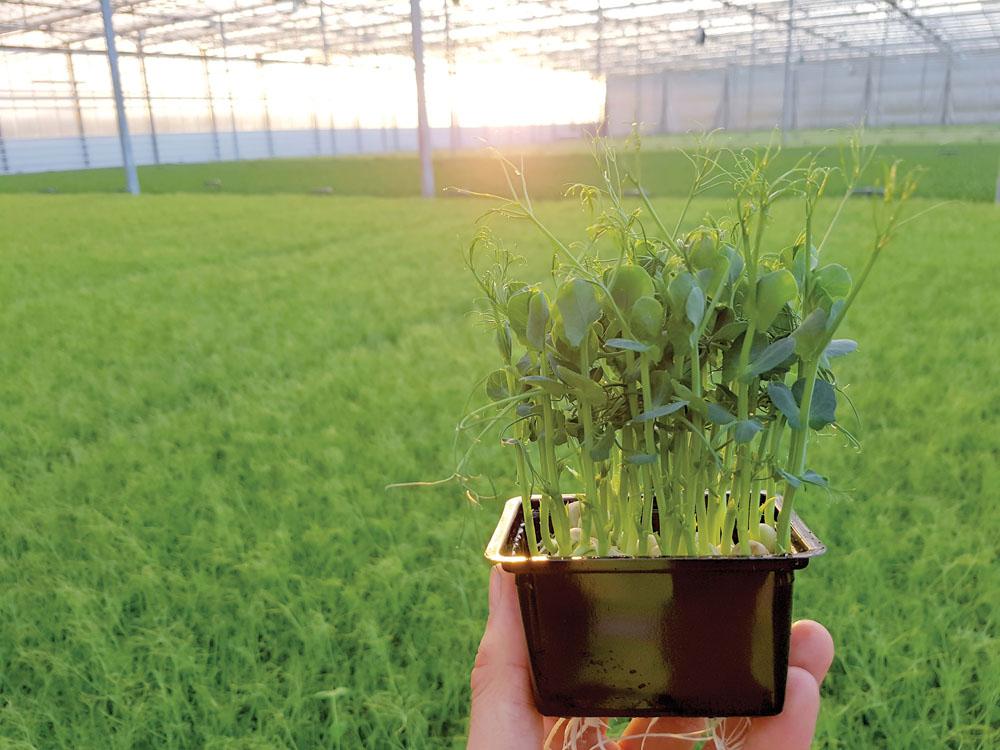micro herb grower